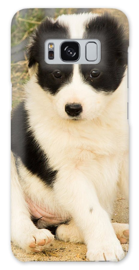 Border Collie Dogs Galaxy S8 Case featuring the photograph All By Himself At Last by Carole Martinez