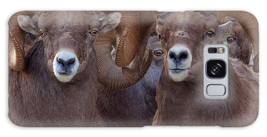 Bighorn Ram Galaxy S8 Case featuring the photograph All Eyes by James Anderson