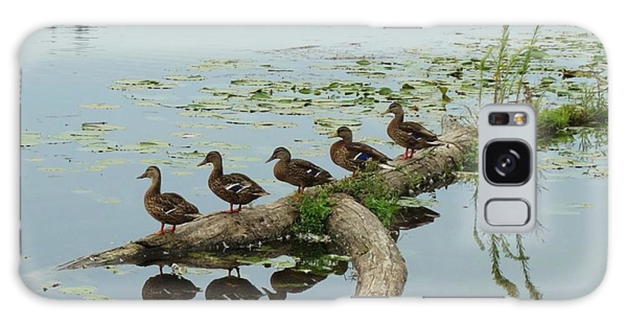 Ducks Galaxy S8 Case featuring the photograph All Lined Up by Laura Gillmer