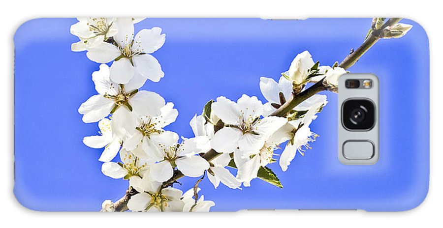 Almond Galaxy S8 Case featuring the photograph Almond Blossom by Heiko Koehrer-Wagner