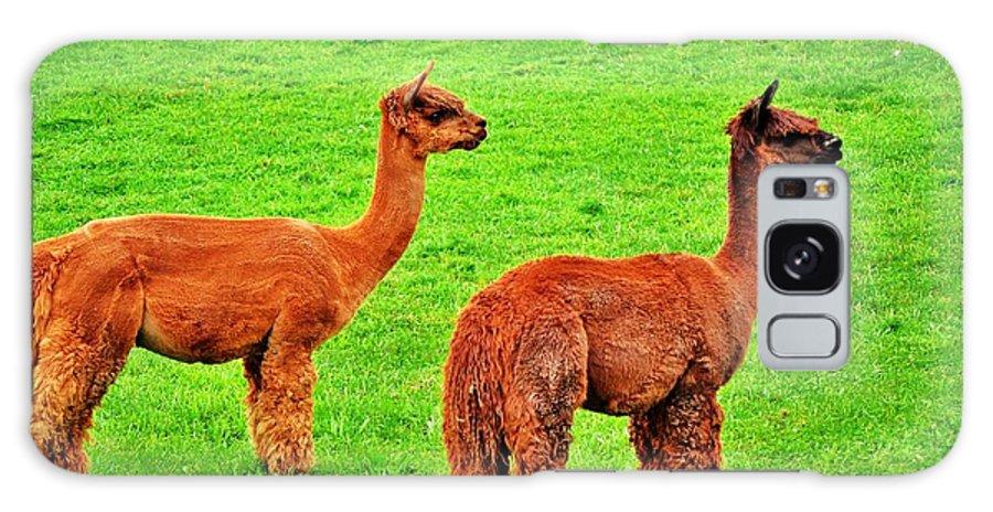 Alpaca Galaxy S8 Case featuring the photograph Alpacas by Christopher Hoffman