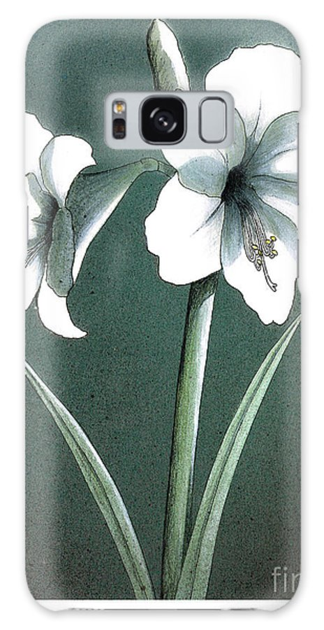 Flowers Plants Galaxy S8 Case featuring the mixed media Amaryllis by Art MacKay
