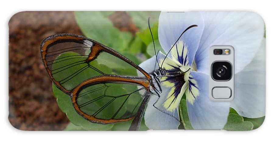 Amazing Galaxy S8 Case featuring the photograph Amazing Butterfly by Florentina De Carvalho