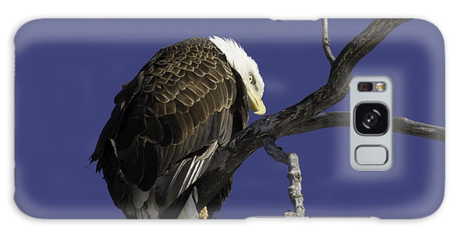 American Adult Bald Eagle Galaxy S8 Case featuring the photograph American Bald Eagle 1 by Thomas Young
