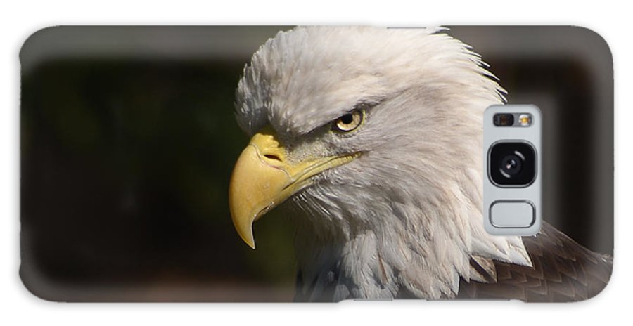 Eagle Galaxy S8 Case featuring the photograph American Eagle by Andrea Wright