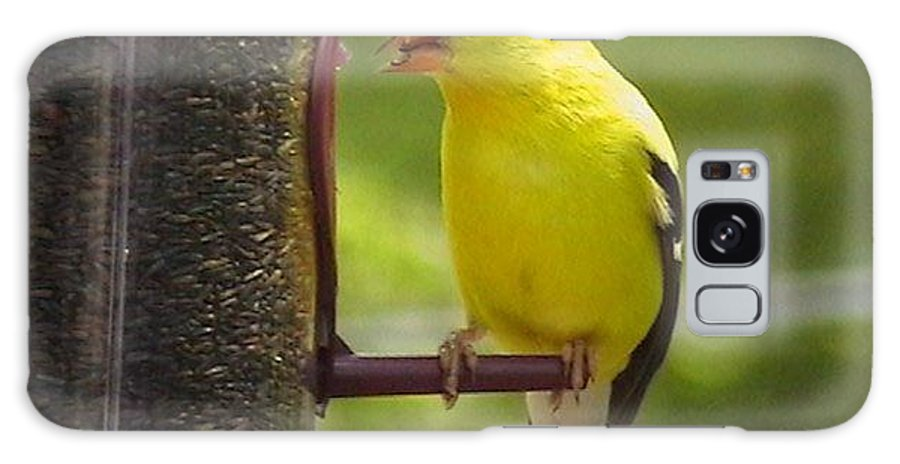Iowa Galaxy S8 Case featuring the photograph American Goldfinch by Robin Vargo