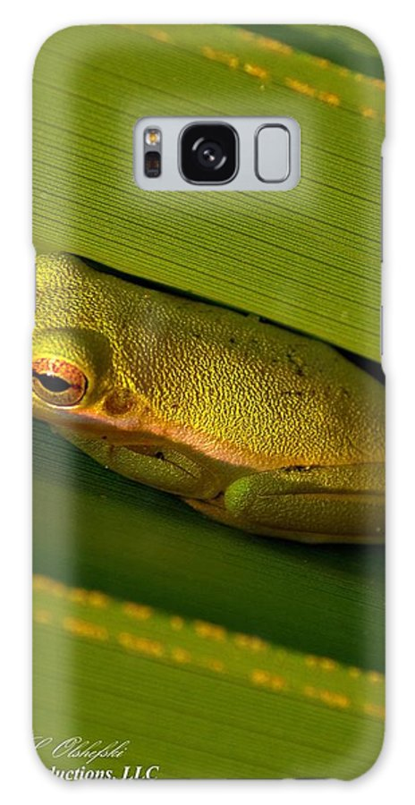 American Galaxy S8 Case featuring the photograph American Green Tree Frog I Mlo by Mark Olshefski