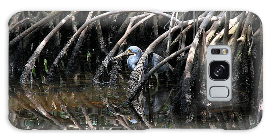 Tricolored Heron Galaxy S8 Case featuring the photograph Among The Mangrove Roots by Doris Potter