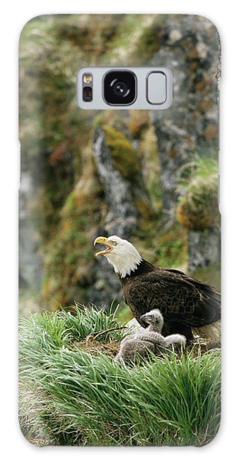 Animals Galaxy S8 Case featuring the photograph An American Bald Eagle And Chicks by Klaus Nigge