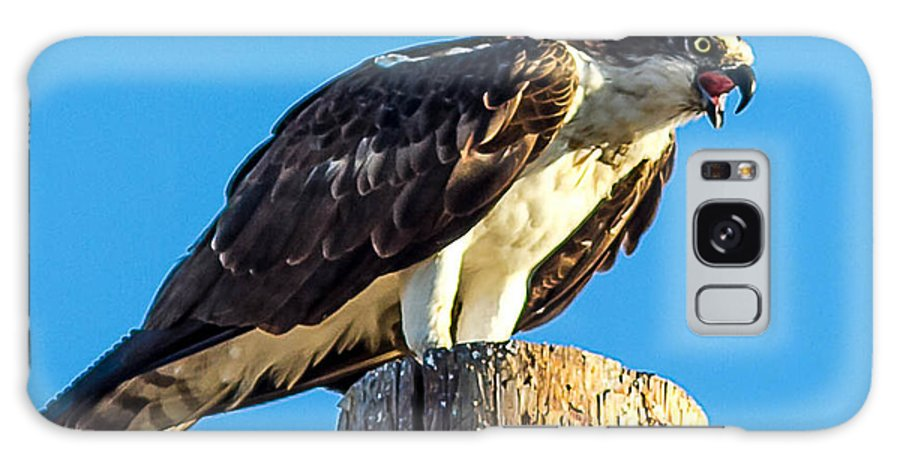 Osprey Galaxy S8 Case featuring the photograph An Osprey Calling by Brian Williamson
