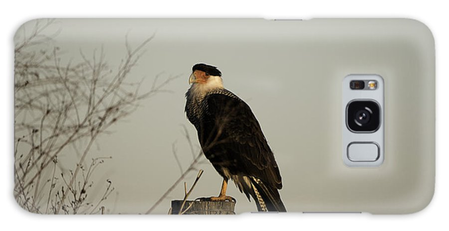 Caracara Galaxy S8 Case featuring the photograph Anahuac Caracara by Tim Moore