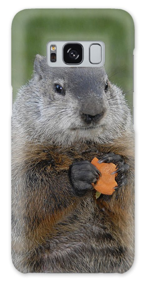 Groundhog Galaxy S8 Case featuring the photograph And Have You Looked In The Mirror Lately by Paul W Faust - Impressions of Light