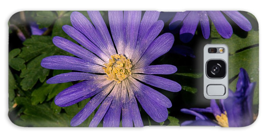 Flower Galaxy S8 Case featuring the photograph Anemone Blanda Blue by Tikvah's Hope