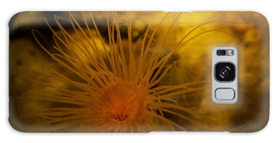 Sea Anemone Galaxy S8 Case featuring the photograph Anemone Three by SFPhotoStore