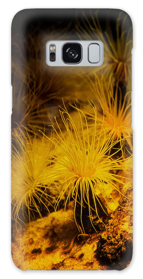 Sea Anemone Galaxy S8 Case featuring the photograph Anemone Two by SFPhotoStore