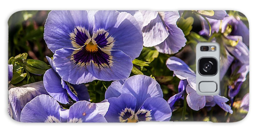 Pansy Galaxy S8 Case featuring the photograph Angry Pansy by David McAlpine