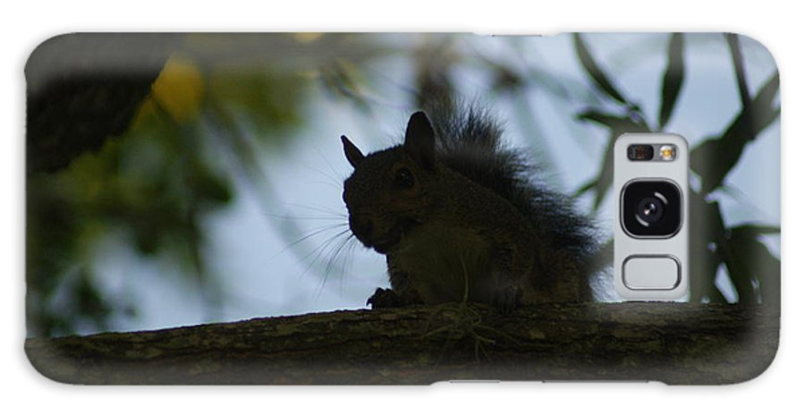 Squirrels Galaxy S8 Case featuring the photograph Angry Squirrel by Johnny Mcdonald