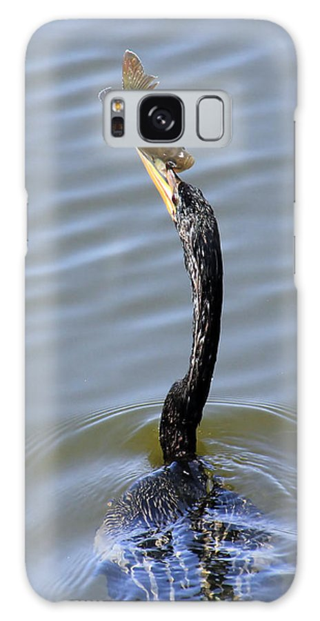Bird Galaxy S8 Case featuring the photograph Anhinga Catch by Rosalie Scanlon