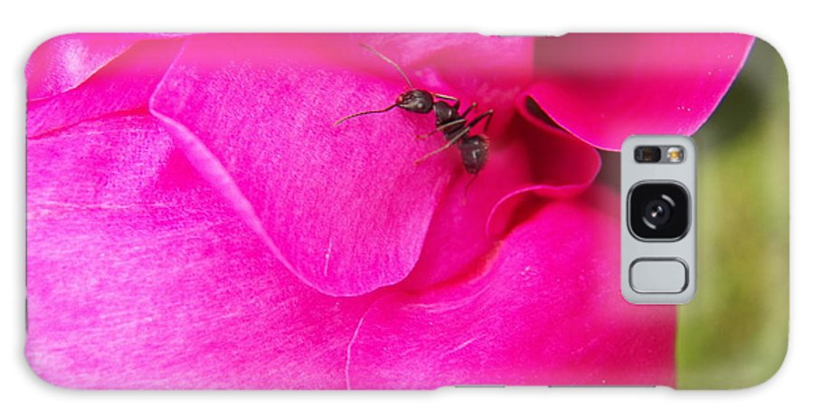 Pink Galaxy S8 Case featuring the photograph Ant On Pink Petals by Corinne Elizabeth Cowherd
