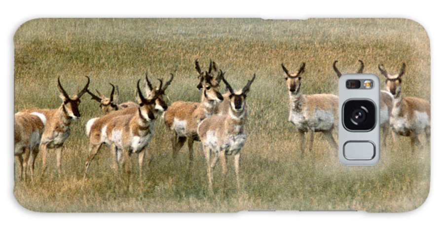 Antelope Galaxy S8 Case featuring the photograph Antelope by Vaswaith Elengwin