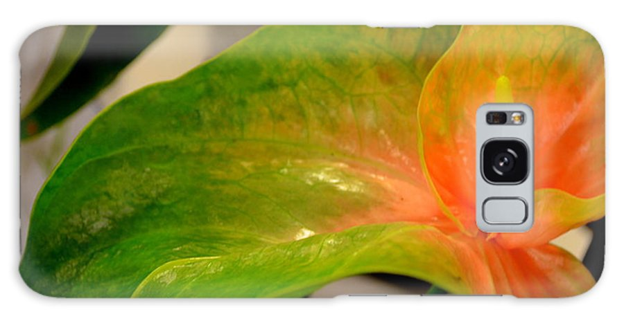 Anthurium Galaxy S8 Case featuring the photograph Anthurium In Red And Green by Mary Deal