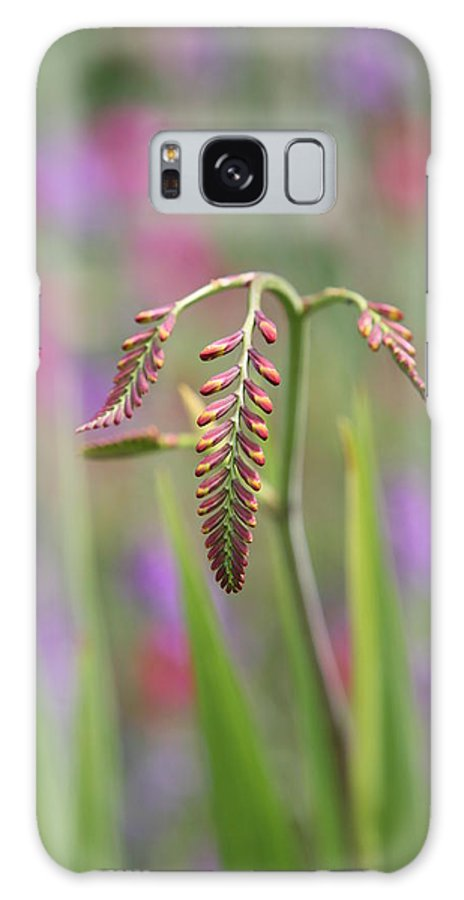 Crocosmia Galaxy S8 Case featuring the photograph Anticipation by Mark Severn