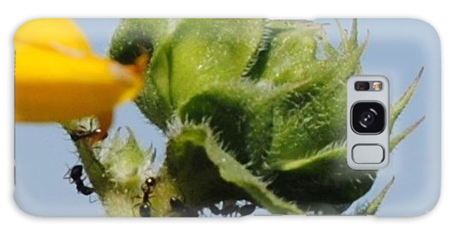 Galaxy S8 Case featuring the photograph Ants Sunflower by Brandon Finister