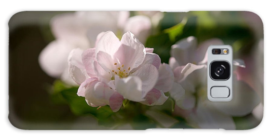 Apple Galaxy S8 Case featuring the photograph Apple Blossoms by Bernard Lynch