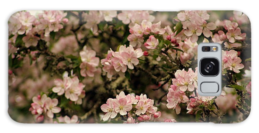 Apple Blossoms Galaxy S8 Case featuring the photograph Apple Blossoms by Bethany Foster