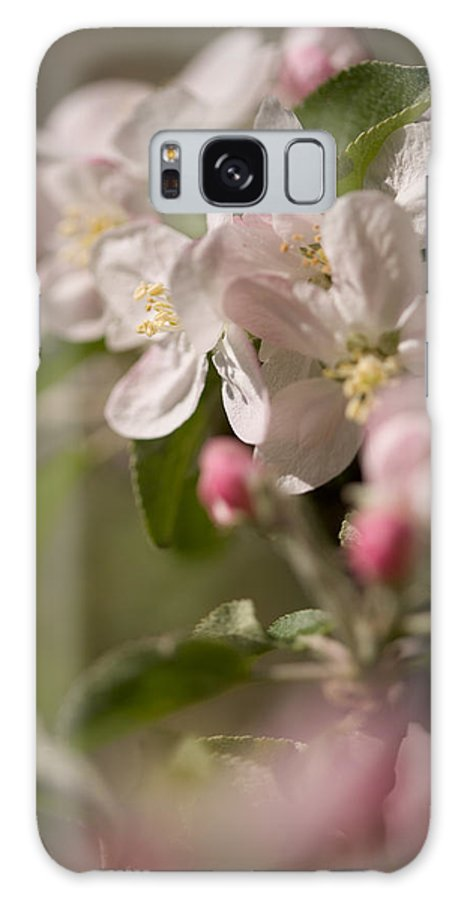 Flowers Galaxy S8 Case featuring the photograph Apple Flowers by Bernard Lynch