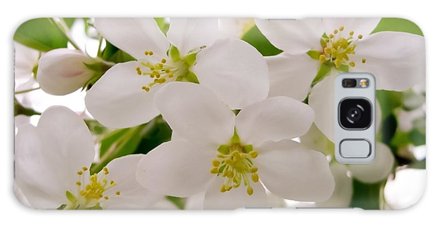 Apple Tree Blossoms Galaxy S8 Case featuring the photograph Apple Tree Blossoms by Cynthia Woods