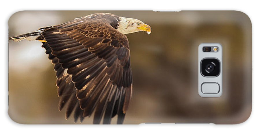 Eagle Galaxy S8 Case featuring the photograph Approaching Adulthood by Kevin Dietrich