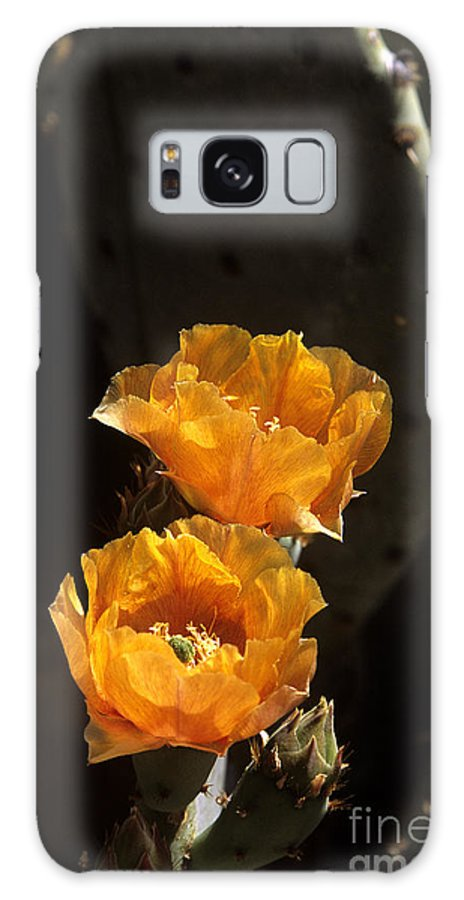 Cactus Galaxy S8 Case featuring the photograph Apricot Blossoms by Kathy McClure