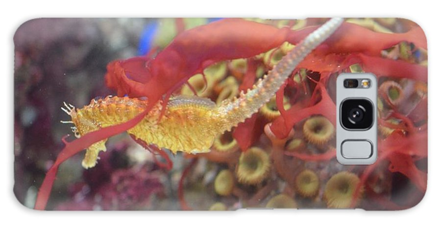 Sea Horse Galaxy S8 Case featuring the photograph Aquarium Fun by Chandra Wesson