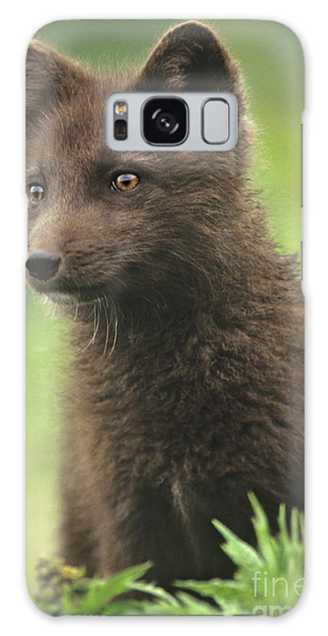 North America Galaxy S8 Case featuring the photograph Arctic Fox Portrait Alaska Wildlife by Dave Welling