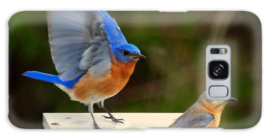 Birds Galaxy S8 Case featuring the photograph Arriving Flight by Bena Travis