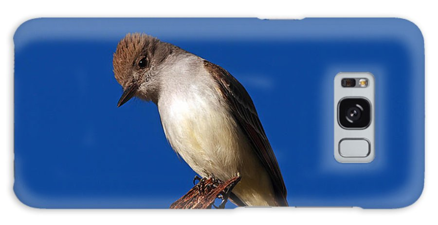 Birds Galaxy S8 Case featuring the photograph Ash-throated Flycatcher by John Kulberg
