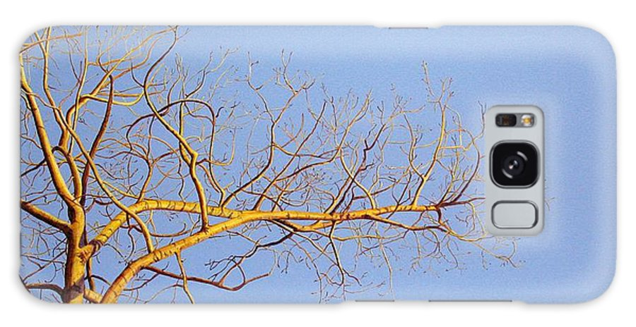 Aspen Painting Galaxy Case featuring the painting Aspen In The Autumn Sun by Elaine Booth-Kallweit