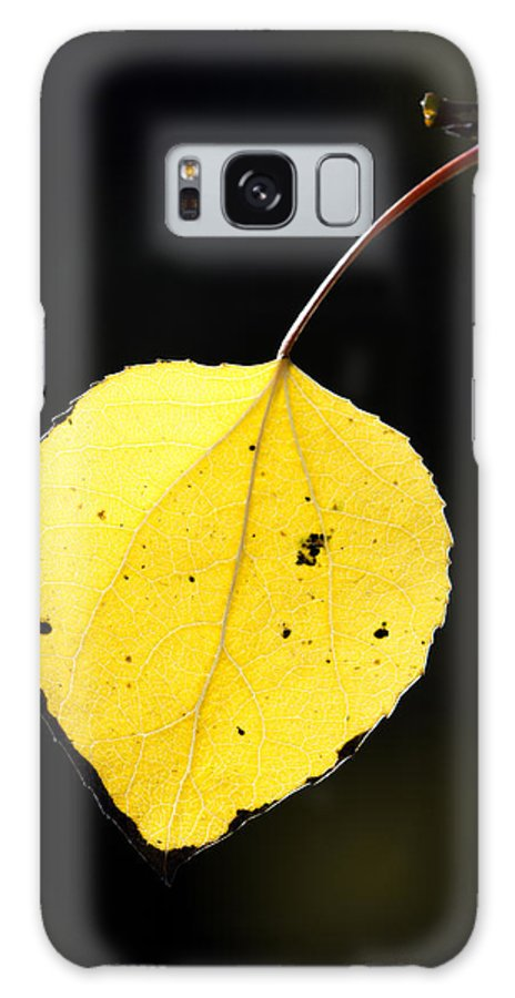 Aspen Galaxy S8 Case featuring the photograph Aspen Leaf In Fall by Gary Langley