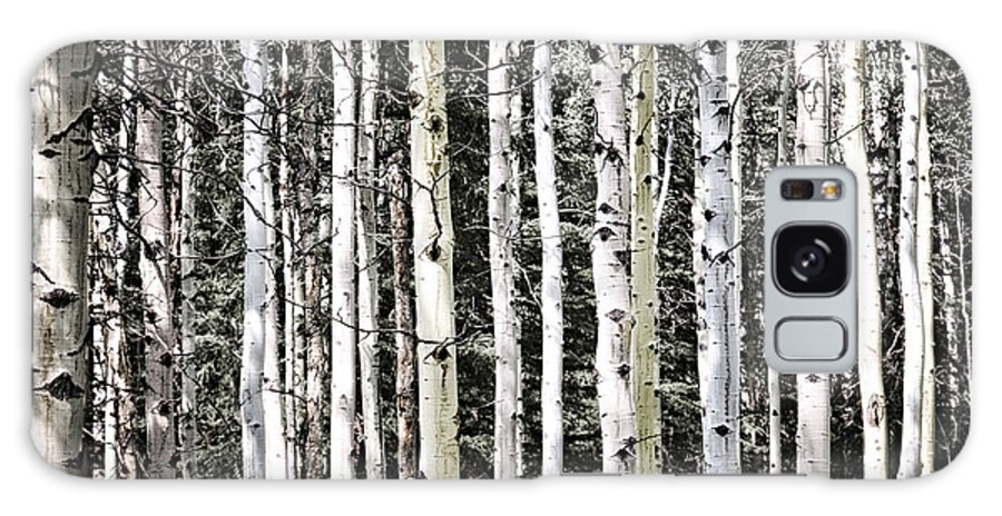 Trees Galaxy S8 Case featuring the photograph Aspen Tree Trunks by Elena Elisseeva