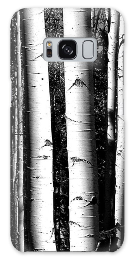 Black And White Galaxy S8 Case featuring the photograph Aspens by Jeff Brunton