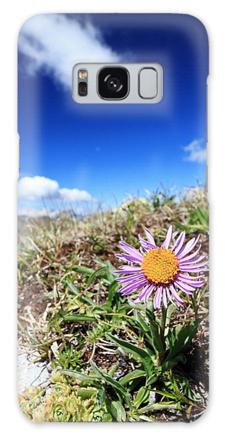 Alpine Galaxy S8 Case featuring the photograph Aster Alpinus by Antonio Scarpi