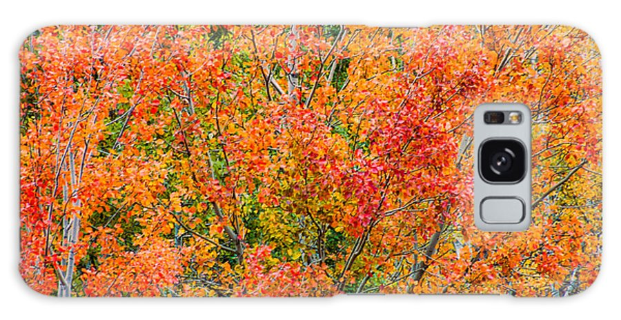 Ihor Galaxy S8 Case featuring the photograph Autumn Outbeats Summer by Ihor Bodnar