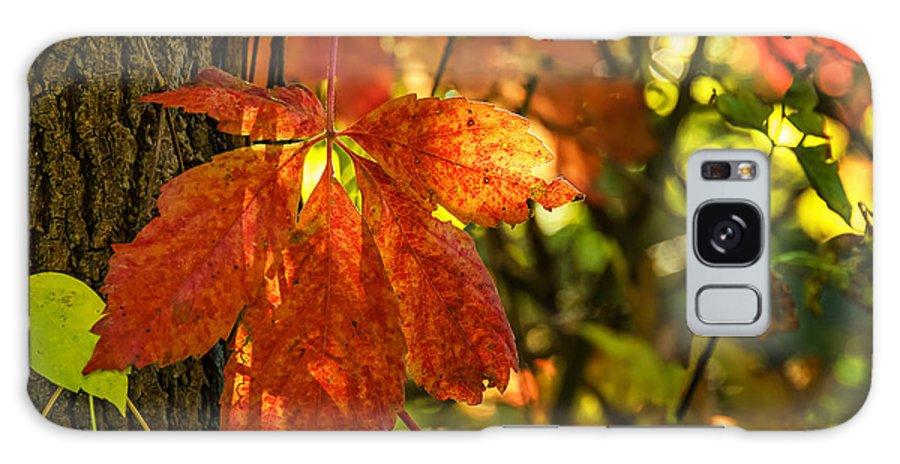Steve Harrington Galaxy S8 Case featuring the photograph Autumn Begins 2 by Steve Harrington