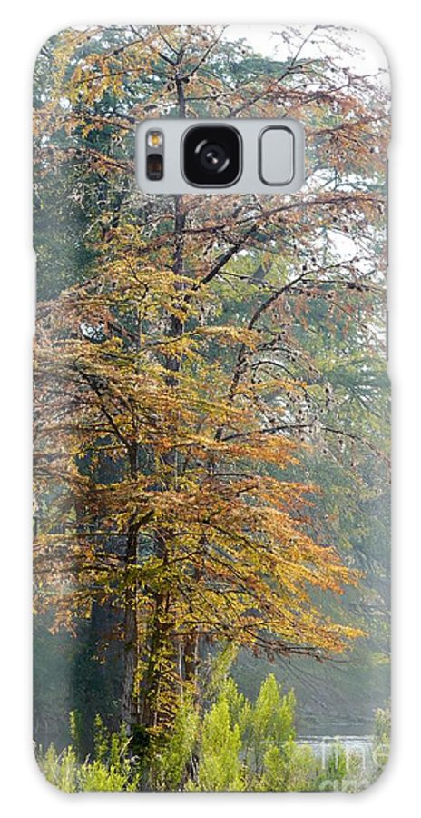 Autumn Galaxy S8 Case featuring the photograph Autumn Cypress by Gary Richards