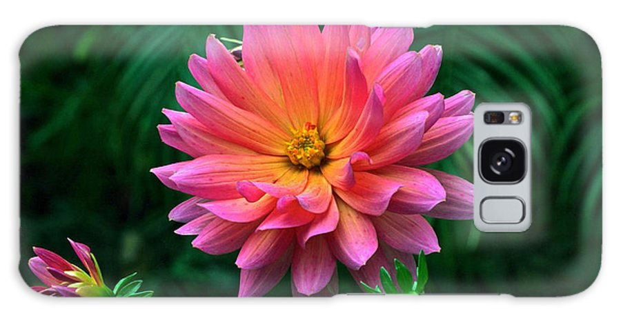 Dahlia Flowers And Buds Galaxy S8 Case featuring the photograph Autumn Dahlias And Palms by Byron Varvarigos