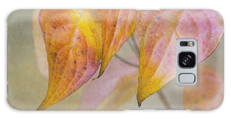 Dogwood Galaxy S8 Case featuring the photograph Autumn Dogwood by Angie Vogel