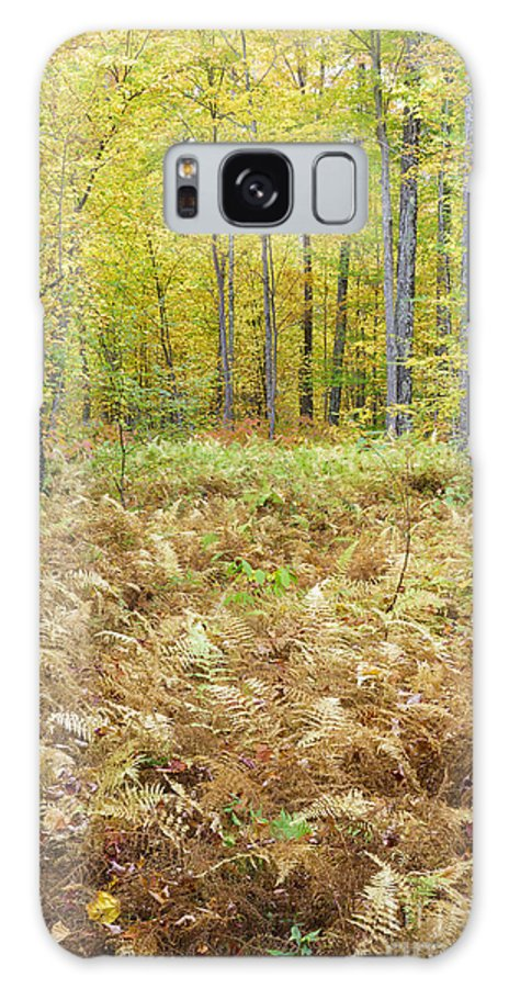 Autumn Galaxy Case featuring the photograph Autumn Forest - White Mountains New Hampshire by Erin Paul Donovan