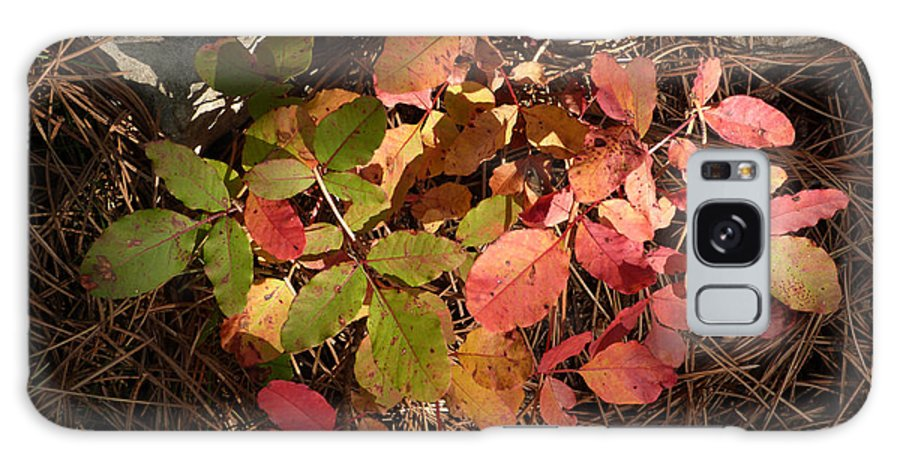 Autumn Colour Galaxy S8 Case featuring the photograph Autumn Leaves And Needles by Phil Banks