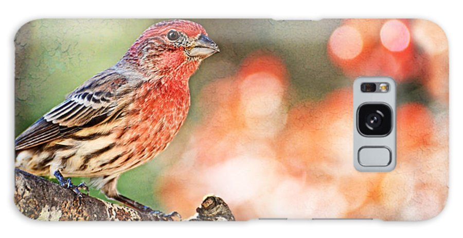Finch Galaxy S8 Case featuring the photograph Autumn Male House Finch 1 by Debbie Portwood